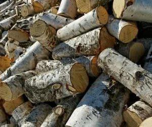 birch-firewood